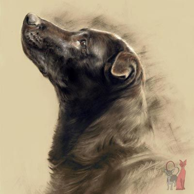 Pet Portraits In Cont 233 Pastel View Portfolio With Lovely